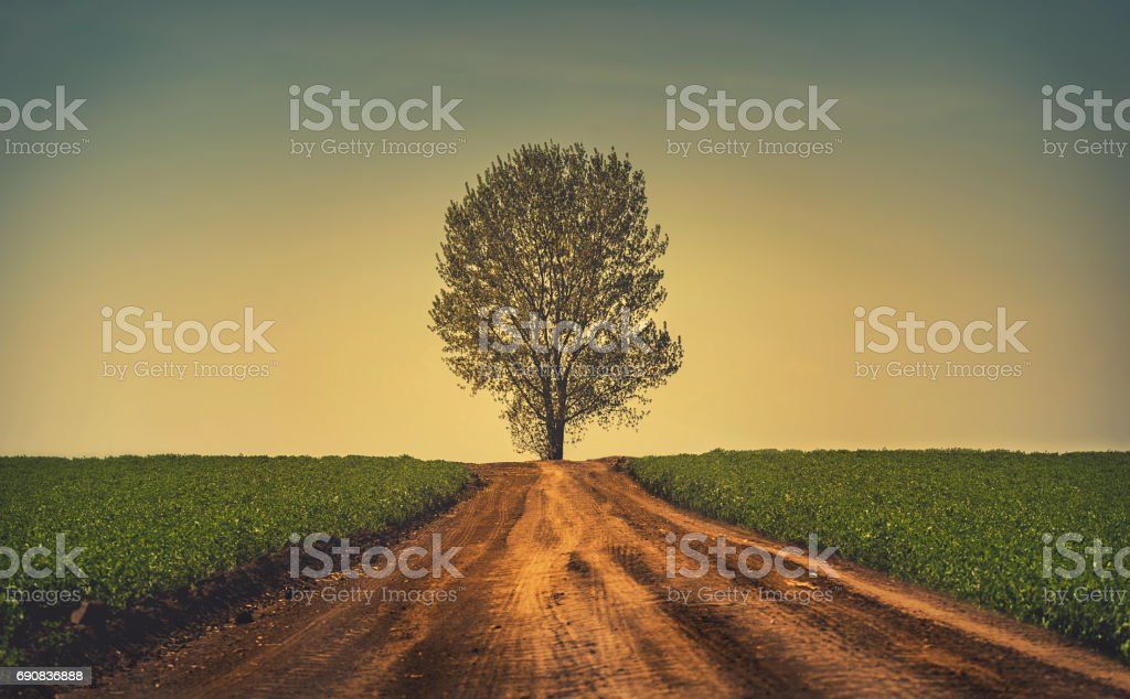 Beautiful tree at the end of the road - foto stock