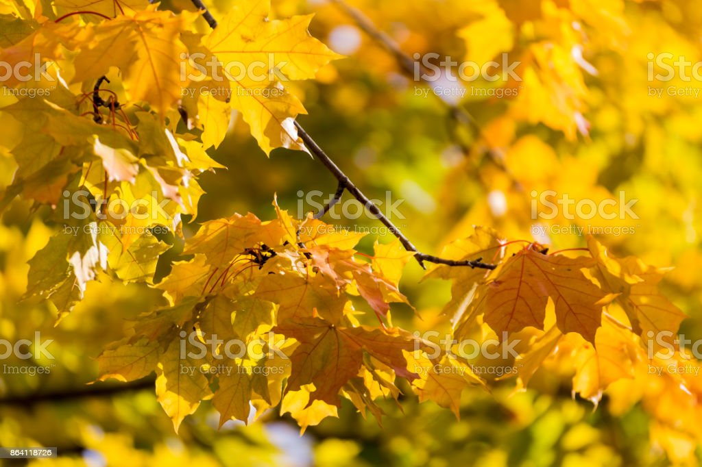 beautiful tree branch in autumnal forest royalty-free stock photo