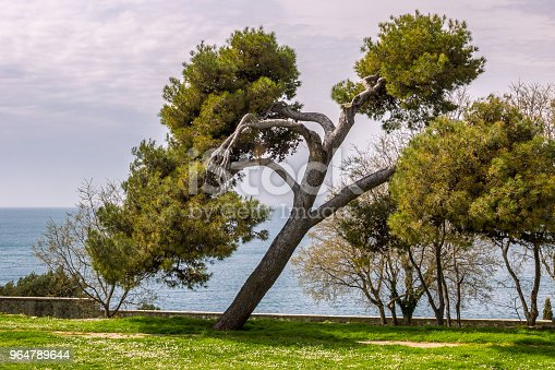 Beautiful Tree In A Garden In Rovinj Stock Photo & More Pictures of Adriatic Sea
