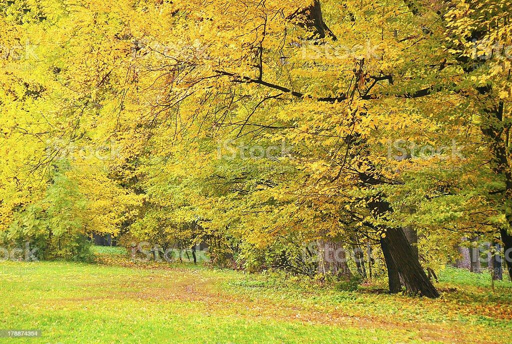 Beautiful tree in autumn park royalty-free stock photo