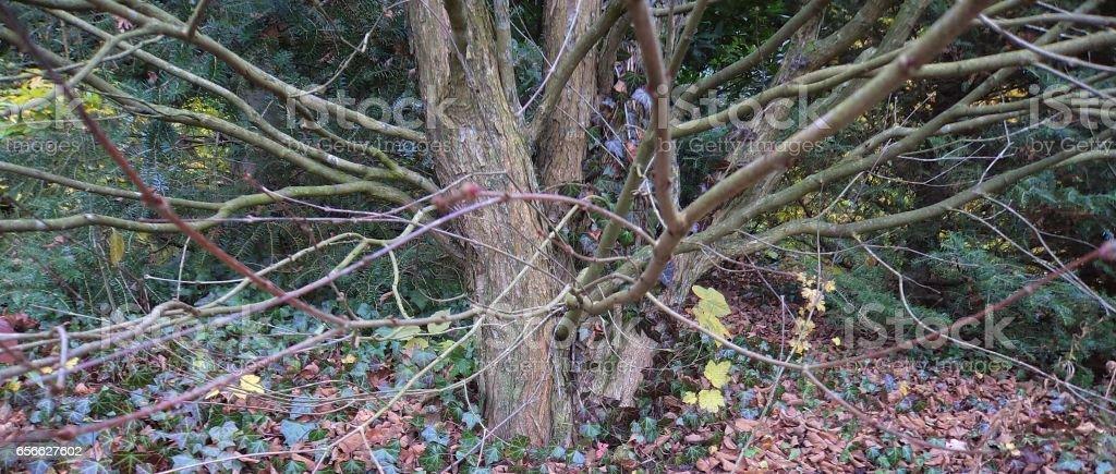 beautiful tree in autumn stock photo