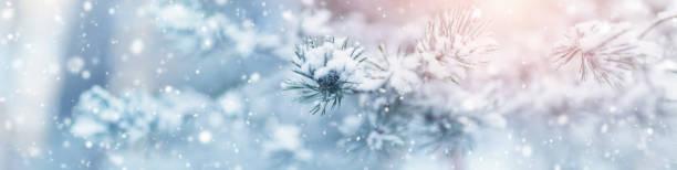schöner baum in winterlandschaft in den späten abend - schneeflocke sonnenaufgang stock-fotos und bilder