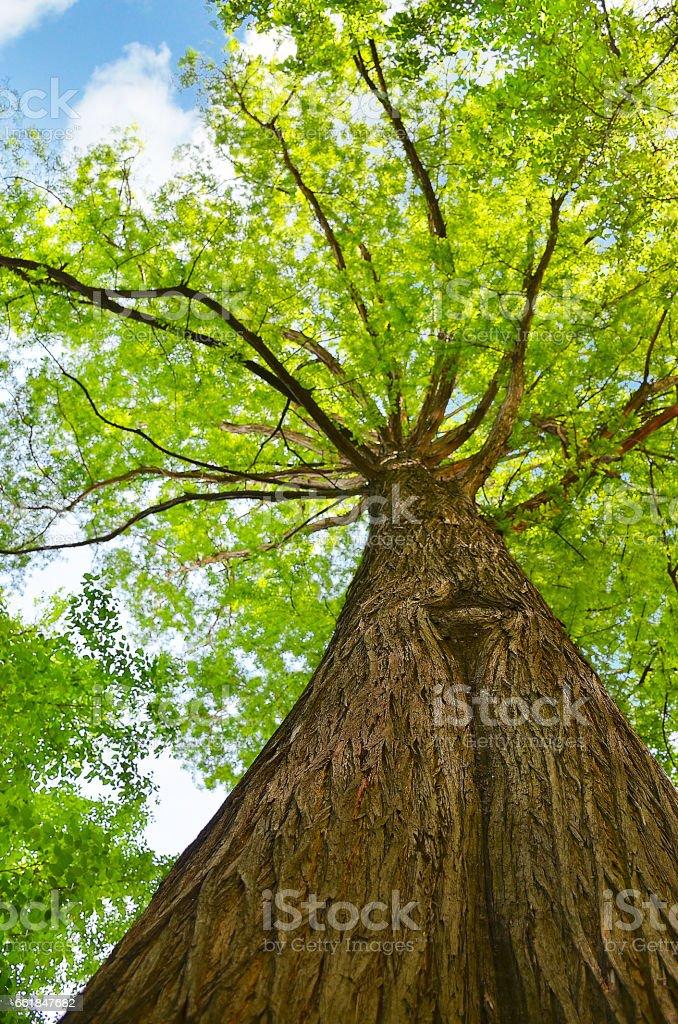 Schöner Baum nachschlagen – Foto