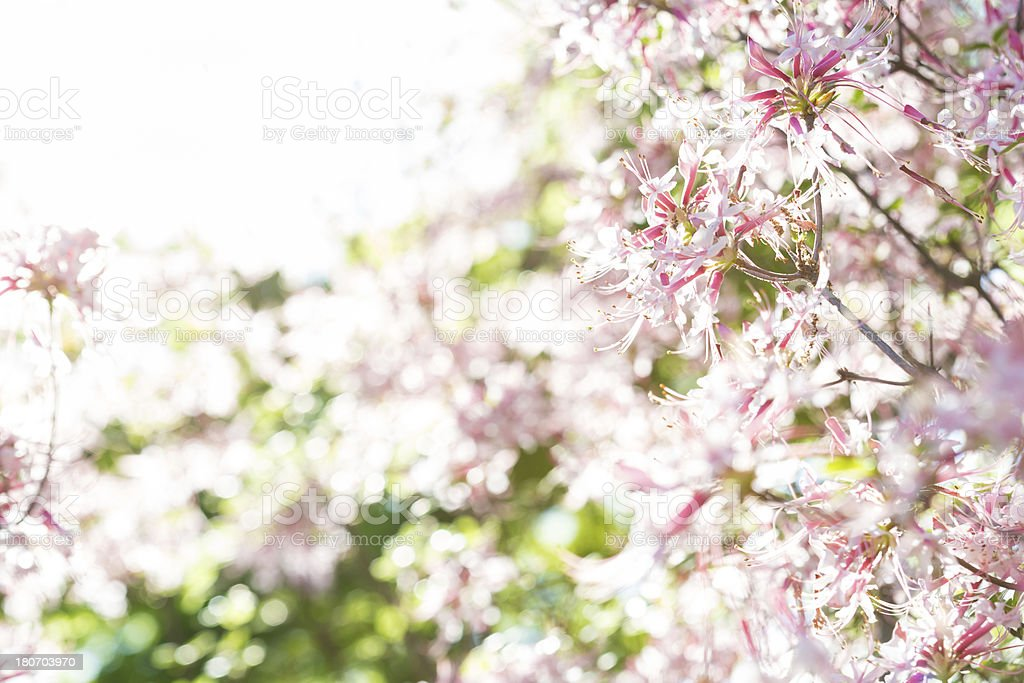 Beautiful tree of flowers, useful for backgrounds. royalty-free stock photo
