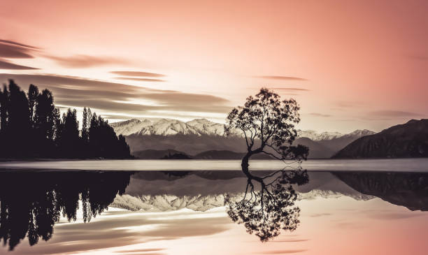 beautiful tree of lake wanaka - symmetry stock photos and pictures