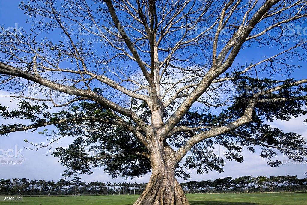 Bellissimo albero foto stock royalty-free
