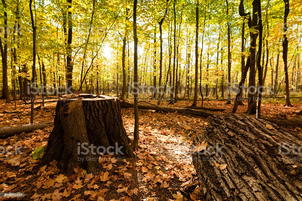 Beautiful tree trunk in forest stock photo