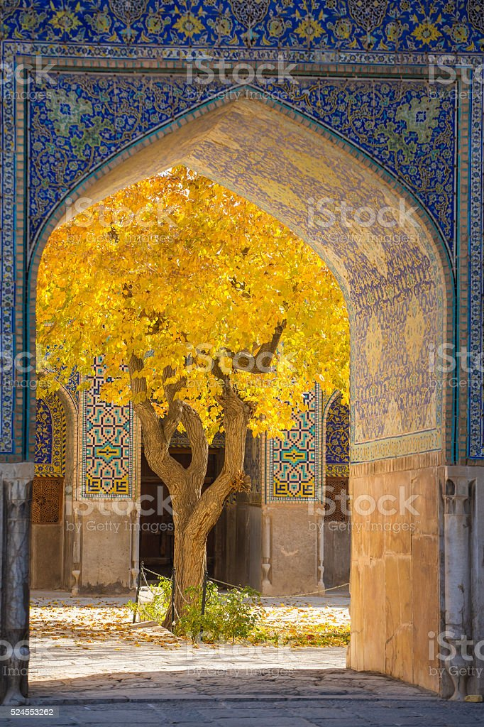 Beautiful tree with yellow leaves framed in arch stock photo