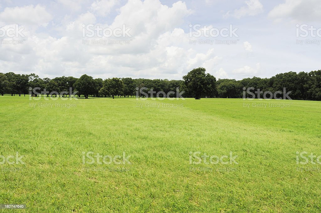 Beautiful Treelined Pasture on a Ocala Florida Horse Farm stock photo