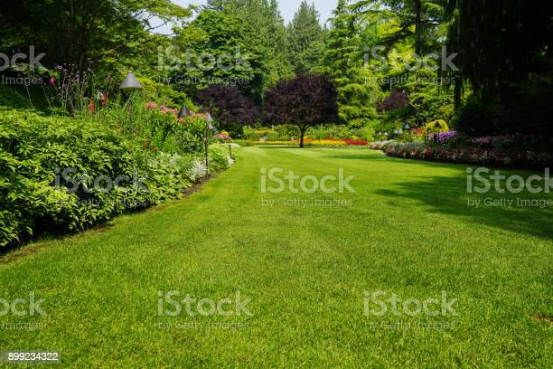 Beautiful trees and green grass in garden picture id899234322?b=1&k=6&m=899234322&s=612x612&h=hitv8u2ba 9 zhmw kppmljyv3myhyh6h9rtm4d icw=