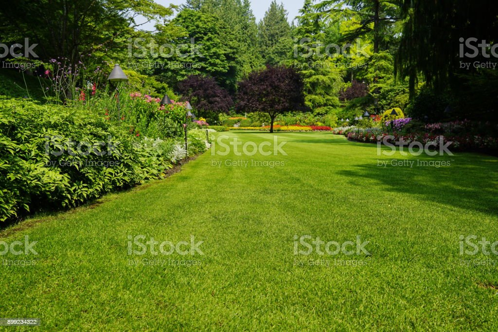 Beautiful trees and green grass  in  garden stock photo