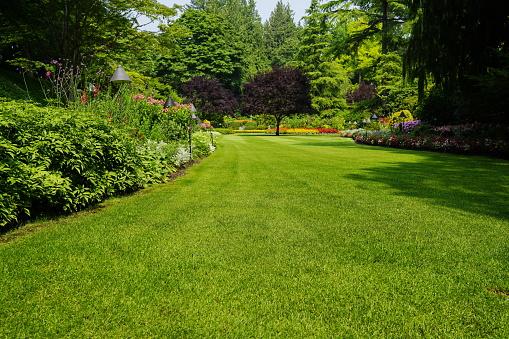 Beautiful Trees And Green Grass In Garden - Fotografias de stock e mais imagens de Ajardinado