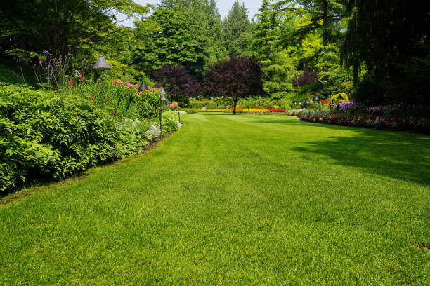 Beautiful trees and green grass  in  garden Beautiful trees and green grass  in  garden. grounds stock pictures, royalty-free photos & images