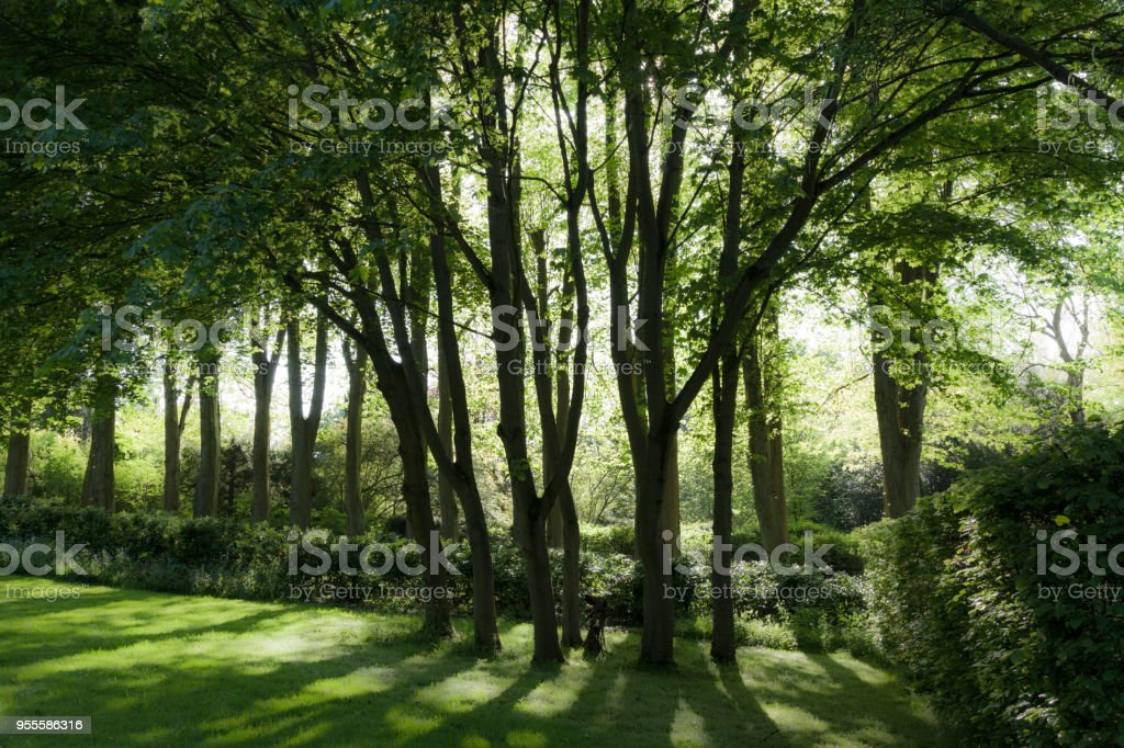 Schöne Bäume Und Schatten Im Sonnigen Frühlingstag Im Garten ...
