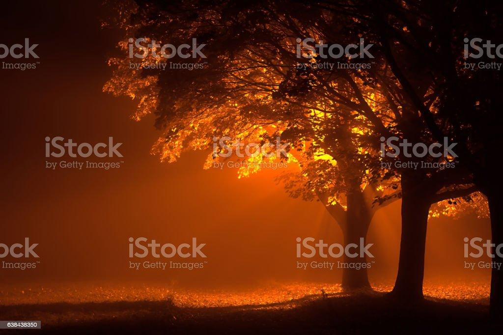 Beautiful trees at night with orange light stock photo