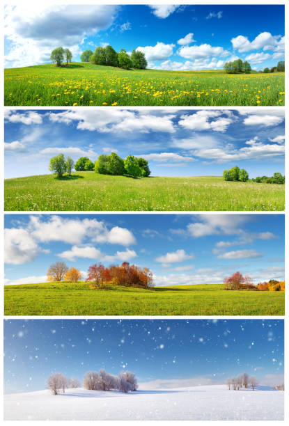 Beautiful trees in four seasons landscape on the field Beautiful trees in four seasons landscape on the field. Spring, summer, autumn and winter collage four seasons stock pictures, royalty-free photos & images