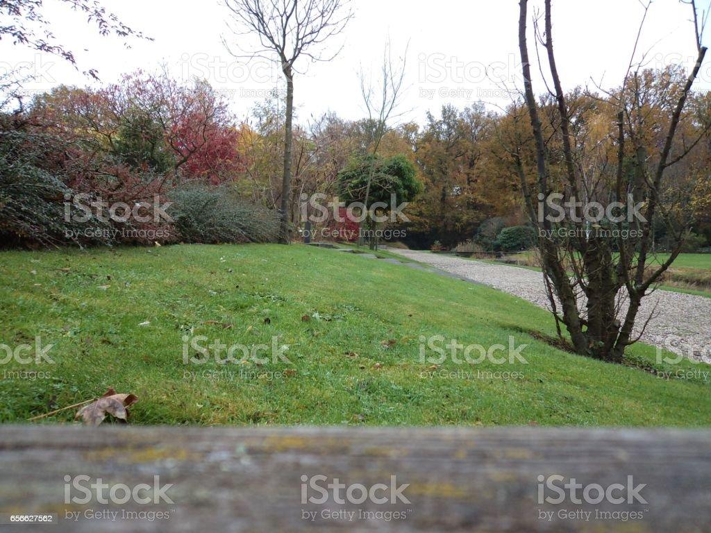Schöne Bäume Im Blick Auf Garten Natur Stockfoto und mehr Bilder von ...