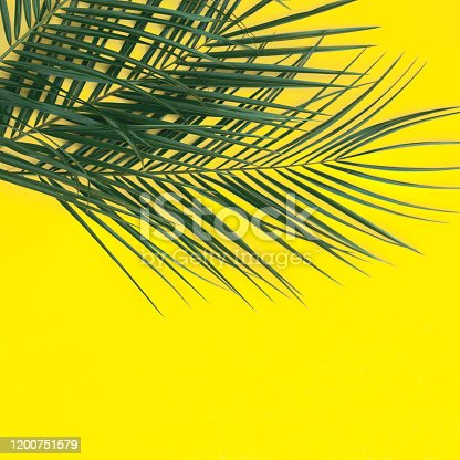 1153498948 istock photo Beautiful tropical background in yellow with palm branches. 1200751579