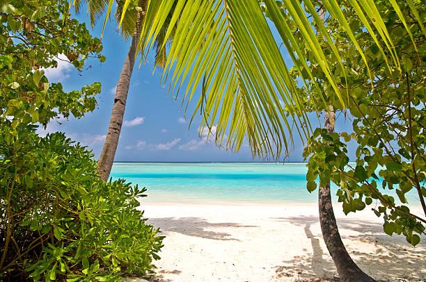 beautiful tropical beach on the maldives stock photo