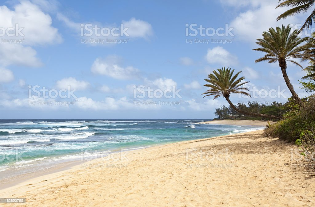 Beautiful Tropical Beach with Palm Trees stock photo