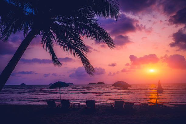 Beautiful tropical beach with palm trees. Sunrises and sunsets. Ocean Beautiful tropical beach with palm trees. Sunrises and sunsets. Ocean. Background goa stock pictures, royalty-free photos & images