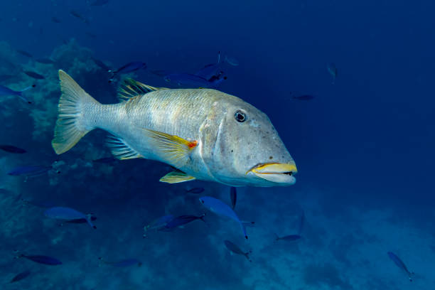 Beautiful tropical big coral and reef fish, Red sea Egypt stock photo