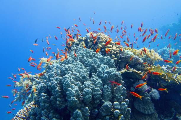 Beautiful tropical coral reef with shoal of coral fish stock photo