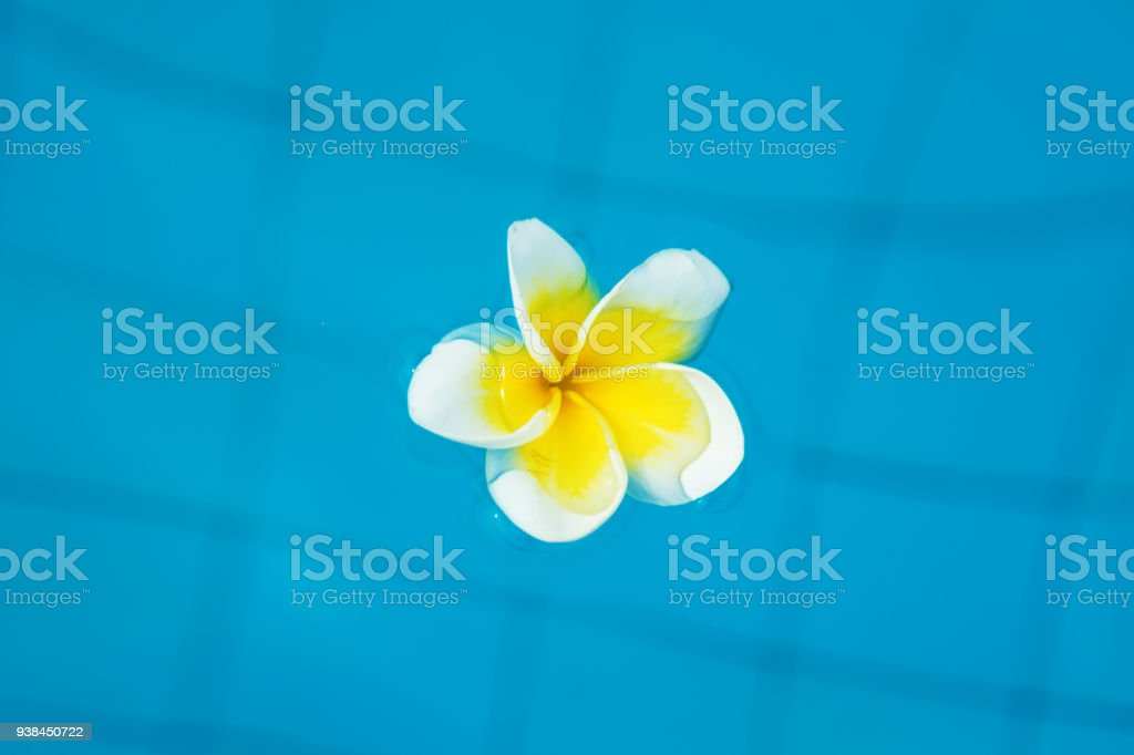 beautiful tropical flowers float on the surface of the water, bright expressive flower in the tropics. stock photo