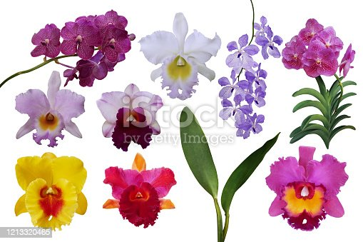 Beautiful tropical flowers orchids plant nature elements, set of various types of tropic Cattleya and Vanda orchids flowers and green leaves isolated on white background with clipping path.