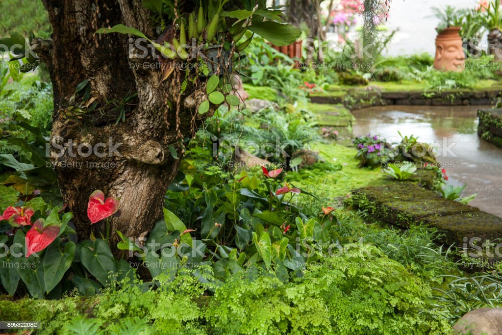 Beautiful Tropical Garden Landscaping With Tropical Plants Stock Photo Download Image Now Istock