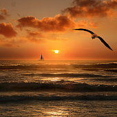 Flying seagull and silhouetted sailboat in orange color seascape view during sunset in Florida