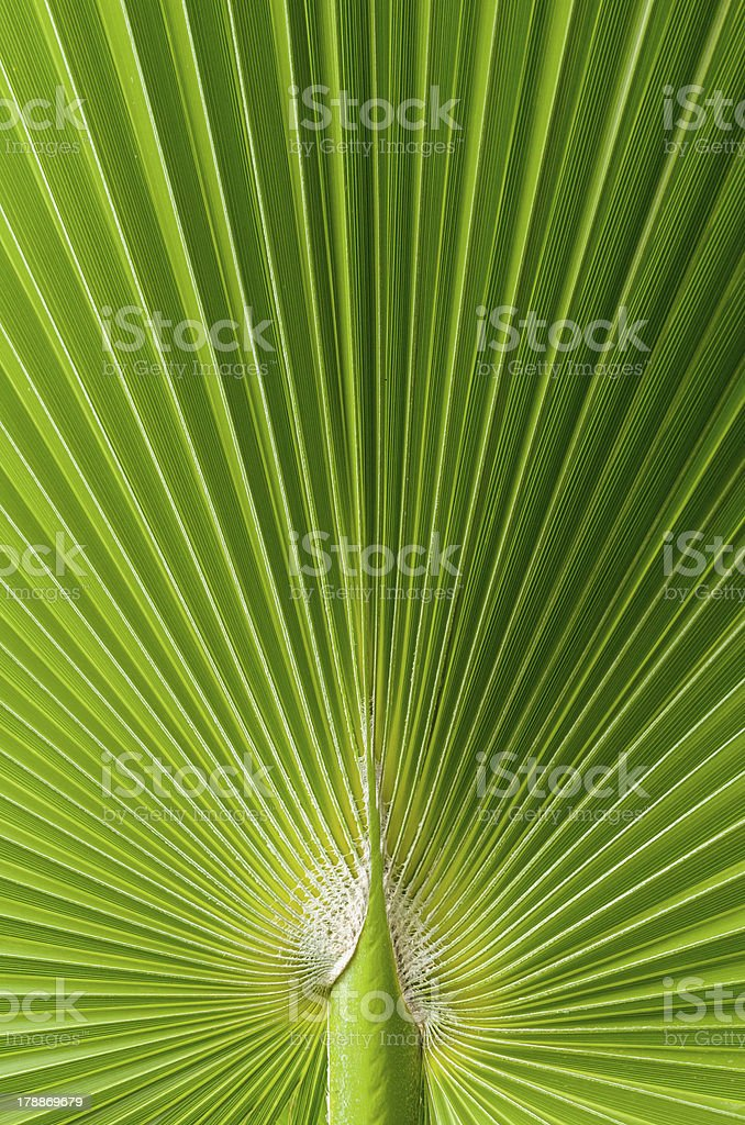 Beautiful tropical palm leaf royalty-free stock photo