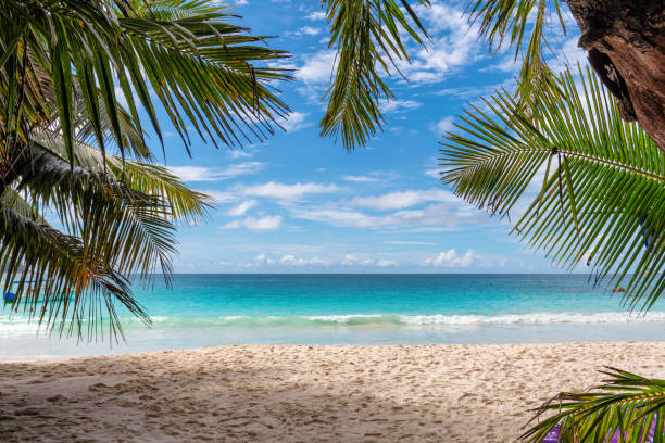 Beautiful tropical sandy beach background stock photo