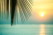 美しい熱帯の日没