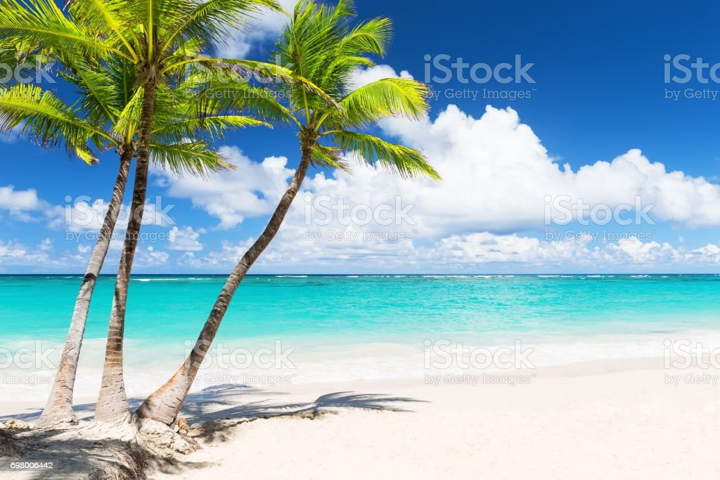 Beautiful tropical white beach and coconut palm trees stock photo