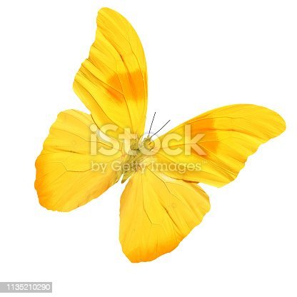 tropical yellow butterfly