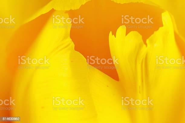 Beautiful tulip close up picture id514630952?b=1&k=6&m=514630952&s=612x612&h=jvbws0anerq1vneg5lia9wn6snhquldey4oestbfd1y=
