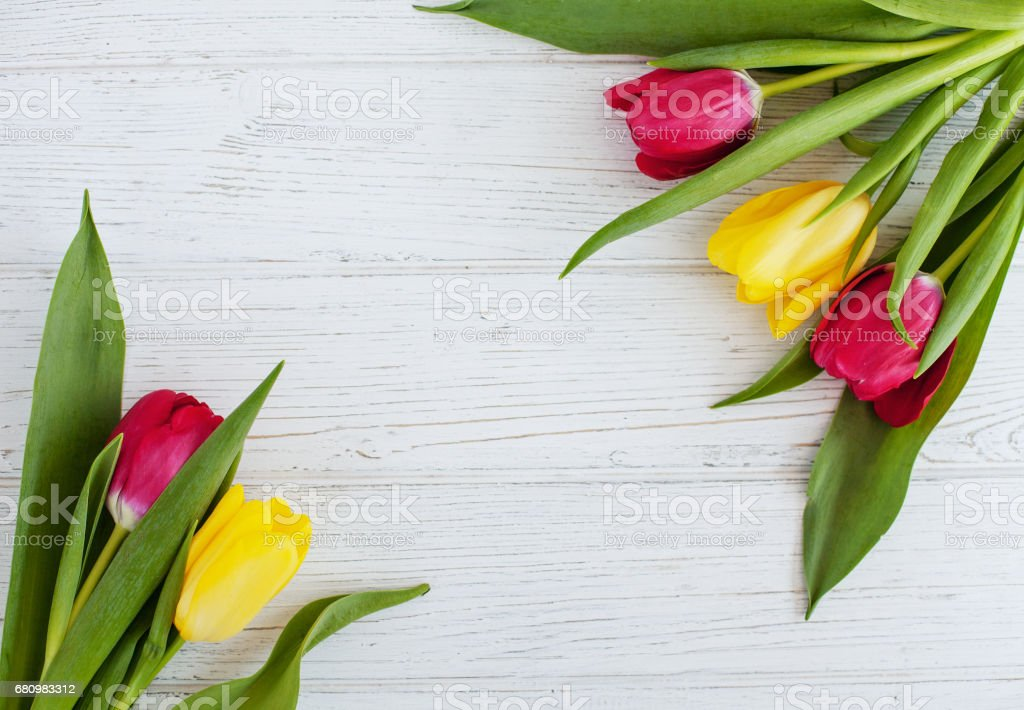 Beautiful tulips on a white background. Conception holiday, Marc royalty-free stock photo