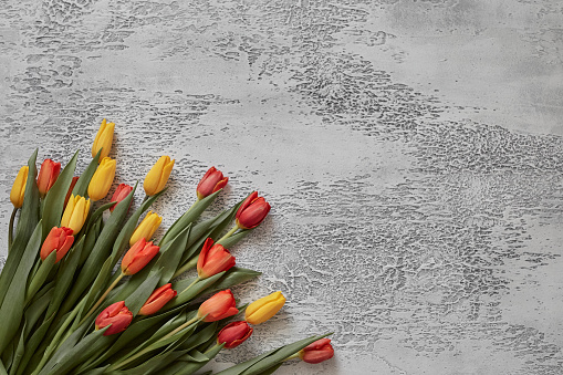 Beautiful tulips on a white textured background, top view, frame, border. Postcard with tulips for any event