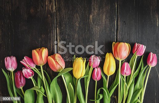 From above colorful fresh beautiful tulips on rough dark wooden background.