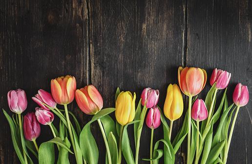 Beautiful tulips on wood