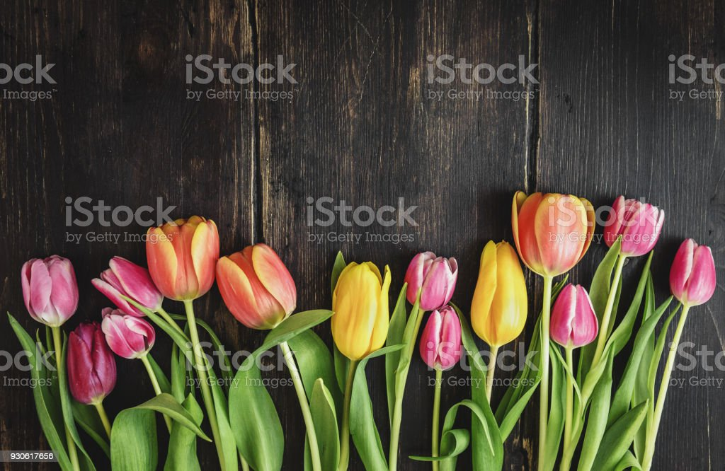 Beautiful tulips on wood stock photo