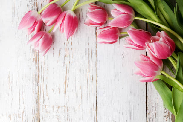 beautiful tulips on wooden background. top view - spring stock pictures, royalty-free photos & images