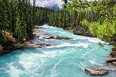 beautiful forest landscape, Yoho National Park, British Columbia, Canada