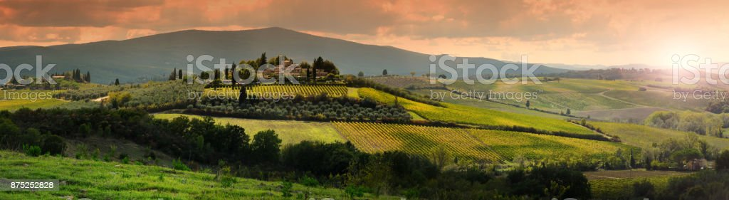 Beautiful Tuscan landscape at sunset with olive trees, cypress and vineyards near Castellina in Chianti, Siena. Italy. stock photo