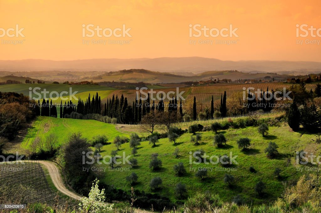 Beautiful Tuscan Landscape with Olive Trees and Cypress near Castellina in chianti, Siena. Italy. stock photo