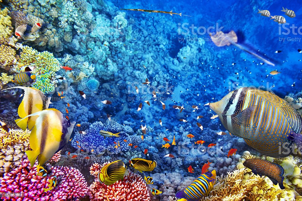 Beautiful underwater world of tropical fish and bright coral stock photo