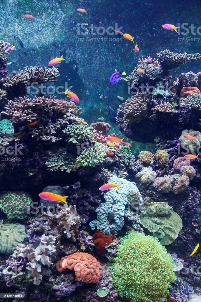 Beautiful underwater world with corals and tropical fish stock photo