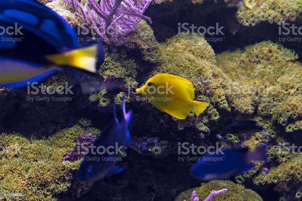 Beautiful underwater world with tropical fish stock photo