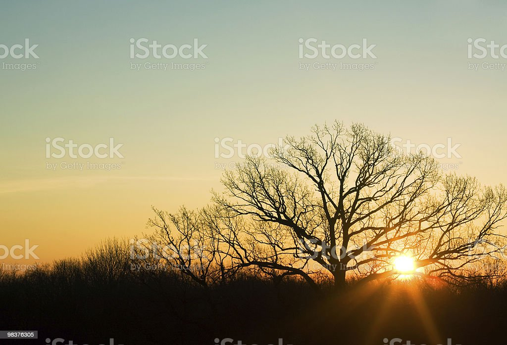 Beautiful uprising. Sunbeams. Spring morning. Sky copy space royalty-free stock photo